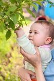 Μικρό παιδί σχετικά με τα φύλλα κερασιών από το χέρι του Στοκ Φωτογραφία