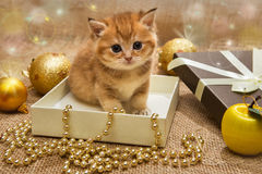 Μικρό πορτοκαλί γατάκι με τη διακόσμηση Χριστουγέννων Στοκ Φωτογραφίες
