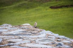 Μικρό πουλί κάτω από τη βροχή στοκ φωτογραφίες