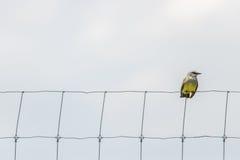 Μικρό πουλί στο φράκτη καλωδίων Στοκ Εικόνες