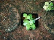 Μικρό πράσινο ζιζάνιο Στοκ εικόνες με δικαίωμα ελεύθερης χρήσης