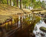 Μικρό ρεύμα που τρέχει σε ένα δασικό πάρκο Θέμα καλοκαιριού και άνοιξης Στοκ Εικόνα