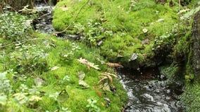 Μικρό ρεύμα στο πολύβλαστο πράσινο δάσος απόθεμα βίντεο