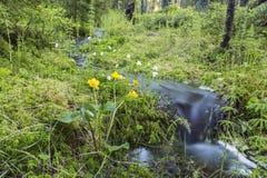 Μικρό ρεύμα στο σουηδικό δάσος στην άνοιξη στοκ φωτογραφίες