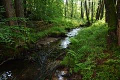 Μικρό ρυάκι στο δάσος στα ξημερώματα Στοκ Εικόνα