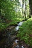 Μικρό ρυάκι στο δάσος στα ξημερώματα Στοκ Φωτογραφία