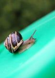 μικρό σαλιγκάρι στοκ φωτογραφίες με δικαίωμα ελεύθερης χρήσης
