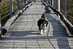 Μικρό σκυλί που τρέχει πέρα από μια γέφυρα για πεζούς Στοκ εικόνα με δικαίωμα ελεύθερης χρήσης