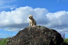 Μικρό σκυλί, μεγάλο εγώ Στοκ Εικόνες