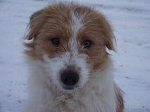Μικρό σκυλί Στοκ Φωτογραφία