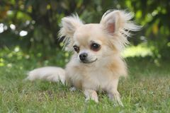 Μικρό σκυλί Στοκ Εικόνα