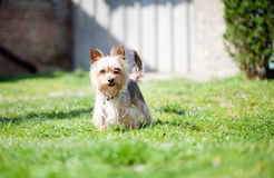 Μικρό σκυλί mutt στο ναυπηγείο στοκ εικόνα