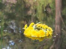 μικρό στεφάνι Στοκ φωτογραφία με δικαίωμα ελεύθερης χρήσης
