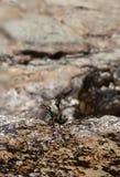 Μικρό φύκι πάνω από έναν βράχο στην παραλία στοκ εικόνες