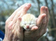 Μικρό χαριτωμένο φως γατακιών στους φοίνικες στοκ φωτογραφία με δικαίωμα ελεύθερης χρήσης