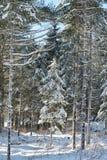 Μικρό χιονισμένο δέντρο πεύκων Στοκ φωτογραφία με δικαίωμα ελεύθερης χρήσης