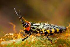 Μικρό χρωματισμένο grasshopper στοκ εικόνες