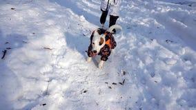 Μικρό dag που τρέχει γρήγορα στο χιόνι φιλμ μικρού μήκους