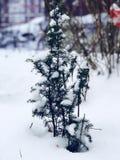 Μικρό Fir-tree Στοκ φωτογραφία με δικαίωμα ελεύθερης χρήσης