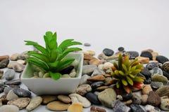 Μικρό flowerpot με τις εγκαταστάσεις στοκ φωτογραφία
