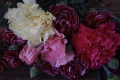 Μικτά λουλούδια γαρίφαλων στην πλήρη άνθιση κοντά επάνω στοκ εικόνα με δικαίωμα ελεύθερης χρήσης