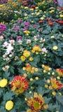 Μικτά λουλούδια Στοκ Φωτογραφία