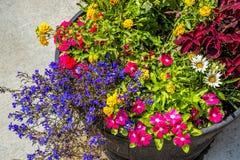 Μικτά λουλούδια στο δοχείο Στοκ Εικόνες