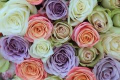 Μικτά τριαντάφυλλα κρητιδογραφιών για έναν γάμο στοκ φωτογραφίες με δικαίωμα ελεύθερης χρήσης