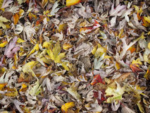 Μικτά φύλλα φθινοπώρου Στοκ Εικόνες