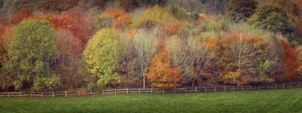 Μικτά χρώματα των δέντρων φθινοπώρου Στοκ Φωτογραφία