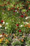 Μικτά χρώματα των τουλιπών και των κρίνων Στοκ εικόνες με δικαίωμα ελεύθερης χρήσης