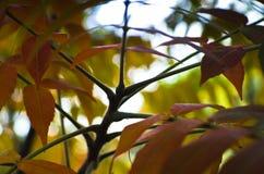Μικτά χρώματα των φύλλων φθινοπώρου, φωτογραφία κινηματογραφήσεων σε πρώτο πλάνο στο νησί ποταμών της Ada σε Βελιγράδι Στοκ Εικόνες