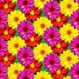 Μικτά Dahlietta χρώματα νταλιών που κάνουν ένα άνευ ραφής σχέδιο Στοκ Φωτογραφίες