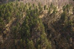 Μικτή δασική άνοιξη στα βουνά Υπόβαθρο Στοκ εικόνες με δικαίωμα ελεύθερης χρήσης