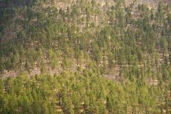 Μικτή δασική άνοιξη στα βουνά Υπόβαθρο Στοκ φωτογραφία με δικαίωμα ελεύθερης χρήσης