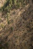 Μικτή δασική άνοιξη στα βουνά Υπόβαθρο Στοκ εικόνα με δικαίωμα ελεύθερης χρήσης