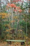 Μικτός δασικός αποβαλλόμενος φθινοπώρου, κωνοφόρος, πάγκος στοκ φωτογραφία