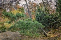 Μικτός δασικός αποβαλλόμενος φθινοπώρου, κωνοφόρος στοκ εικόνες με δικαίωμα ελεύθερης χρήσης