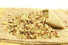 Μικτό άγριο οργανικό καφετί ρύζι Στοκ εικόνα με δικαίωμα ελεύθερης χρήσης