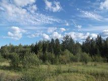 Μικτό δάσος 2 Στοκ Φωτογραφίες