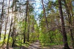 Μικτό αποβαλλόμενος-κωνοφόρο πάρκο πόλεων στοκ εικόνες με δικαίωμα ελεύθερης χρήσης