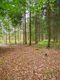 Μικτό δάσος με τα καφετιά φύλλα Στοκ Φωτογραφία