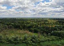 Μικτό δάσος με τα της υφής σύννεφα ( στοκ φωτογραφία