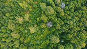 Μικτό δάσος της Σιβηρίας το καλοκαίρι φιλμ μικρού μήκους