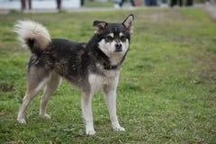 Μικτό πάρκο χλόης σκυλιών bree Στοκ εικόνα με δικαίωμα ελεύθερης χρήσης