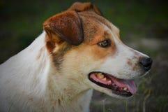 Μικτό σκυλί φυλής υπαίθρια Στοκ Φωτογραφίες
