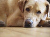 Μικτό σκυλί φυλής Στοκ Φωτογραφίες