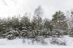 Μικτό χειμώνας δάσος Στοκ Εικόνες
