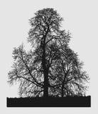 Μινιμαλιστικό δέντρο Στοκ Εικόνες