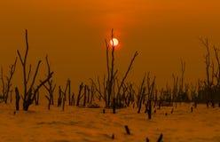 Μινιμαλιστική έννοια Ηλιοβασίλεμα στην παραλία με τα δέντρα θανάτου Σκιαγραφία Π Στοκ Εικόνες